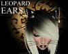 Leopard Ears Pierced