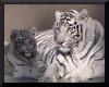 White Tiger Club