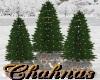 Cha`3 Christmas Trees