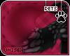 [Pets] Ziro | tail v2