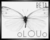 .L. White Butterflies