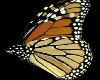 {MDF} monarch