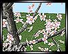 {CS}Sakura Tree