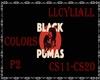 BLACK PUMAS COLORS(p2)