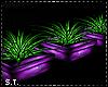 ST: Mardi Gras Plants