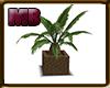 [9V2] Plant B