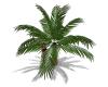 SC Small Palm Tree