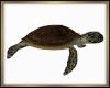 Sea Turtle Ride