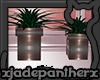 !jp Sorbet Plants V2