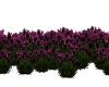 Purple Flowers (outdoor)