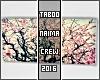 !TC! Sakura Canvas