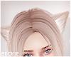 Platinum Cat Ears