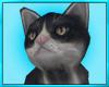 Black Cat Pet