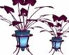 Pulse Plant