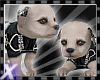 Silverx pup tough