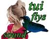 NZ TUI BIRD FLYS W SOUND
