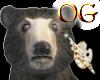 OG/FloridaBlackBear
