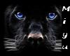 [Miyu]panther SOFA Refec