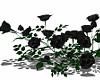 ⛧ Black Rose Bush