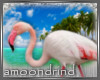 AM:: Flamingo enhancer