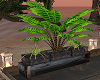 Add Plant Devider Plants