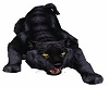 Black Panther Pet