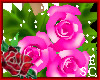 `Gift Roses Pink