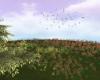 Spring Fields Birds