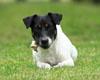 Re doggy so cute