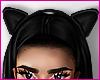 $  Kitten