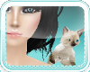 Siamese Kitty [F]