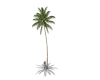 Palm Tree Animated