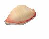 Tai Sushi No Dish