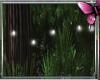 *P Fireflies