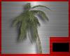 [DxS]Beach Palm tree