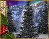 I~North Pole Pine Tree