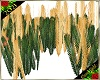 Sea Ferns 1