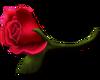 Left Rose