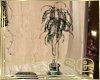 Boho Wisteria Plant