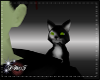 D-Wicked Witch Kitty Pet