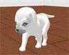 *CuddleWhiteWolf pup