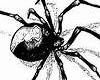 spider chest tattoo