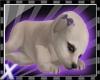 Silverx pup bows 1.