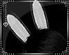 HP|Grey Bunny Ears
