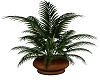 Potted Plant Brown