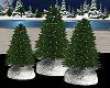 Blue Christmas Trees