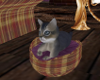 Kitty Basket Animated