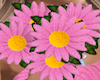|AD| Pink Daisy Bouqet