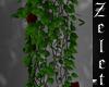 Hanging Rose Vine