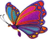 Butterfly-Bright-Colors